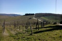 Anello Gaiole in Chianti-Galenda- San Donato in Perano 29/03/2015