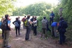 Foreste Casentinesi.Giornata dei parchi. Maggio'18