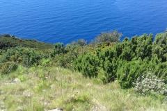 Isola di Gorgona. Maggio '17