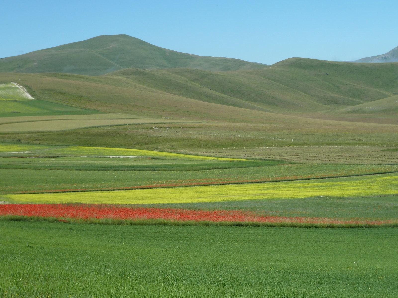 giallo-rosso-verde-fileminimizer