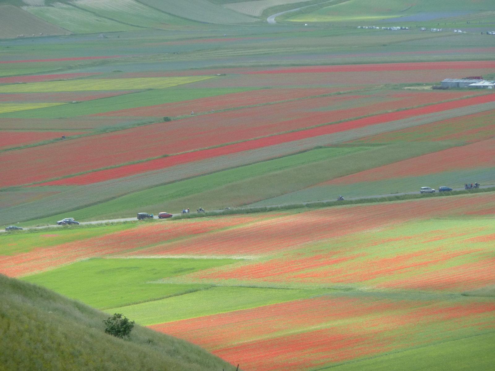 rosso-verde-fileminimizer