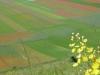 fiori-gialli-3-fileminimizer