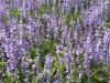 fiori-lilla2-fileminimizer