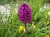 orchidea-fileminimizer