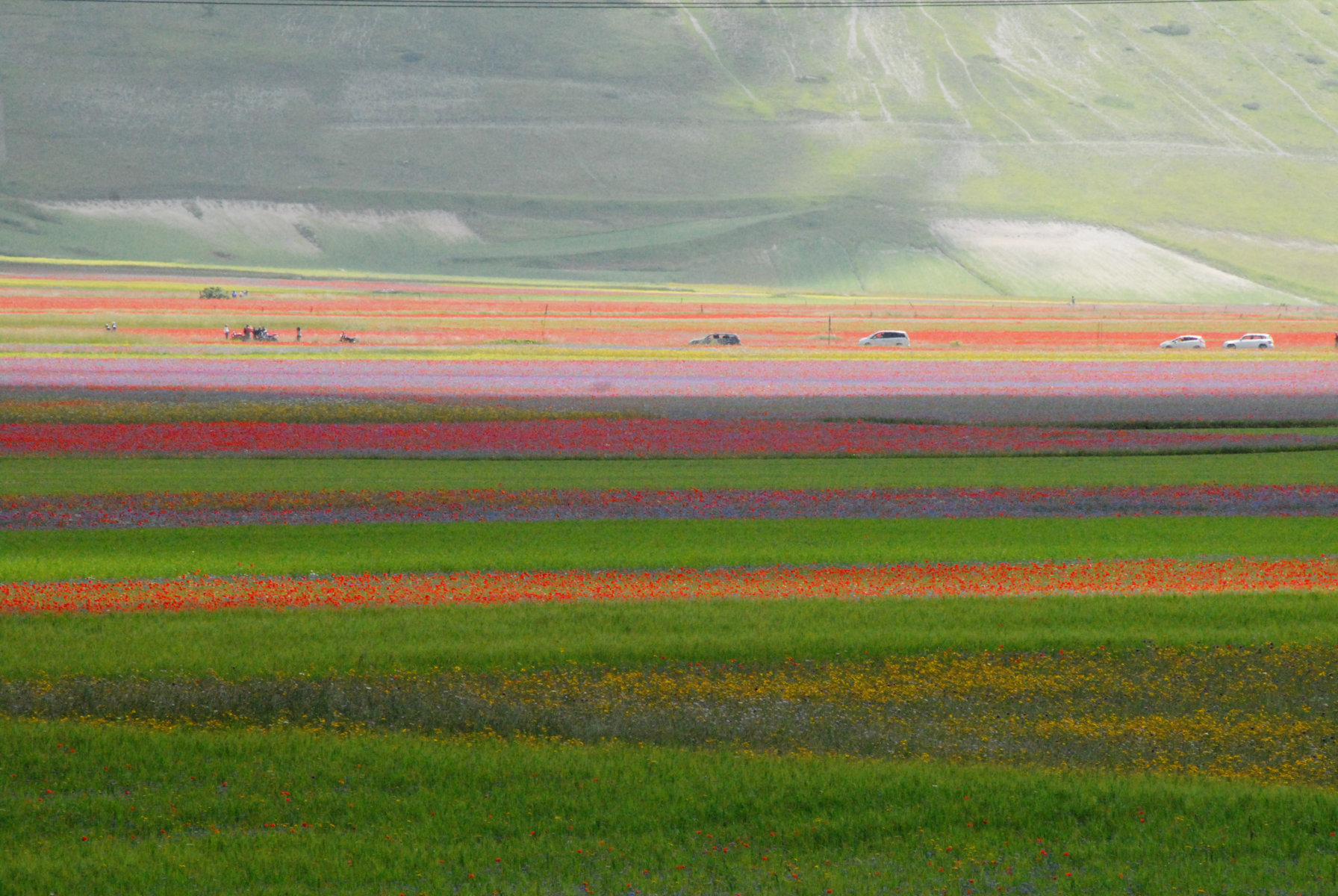 2014-la-fiorita-1a-439-fileminimizer