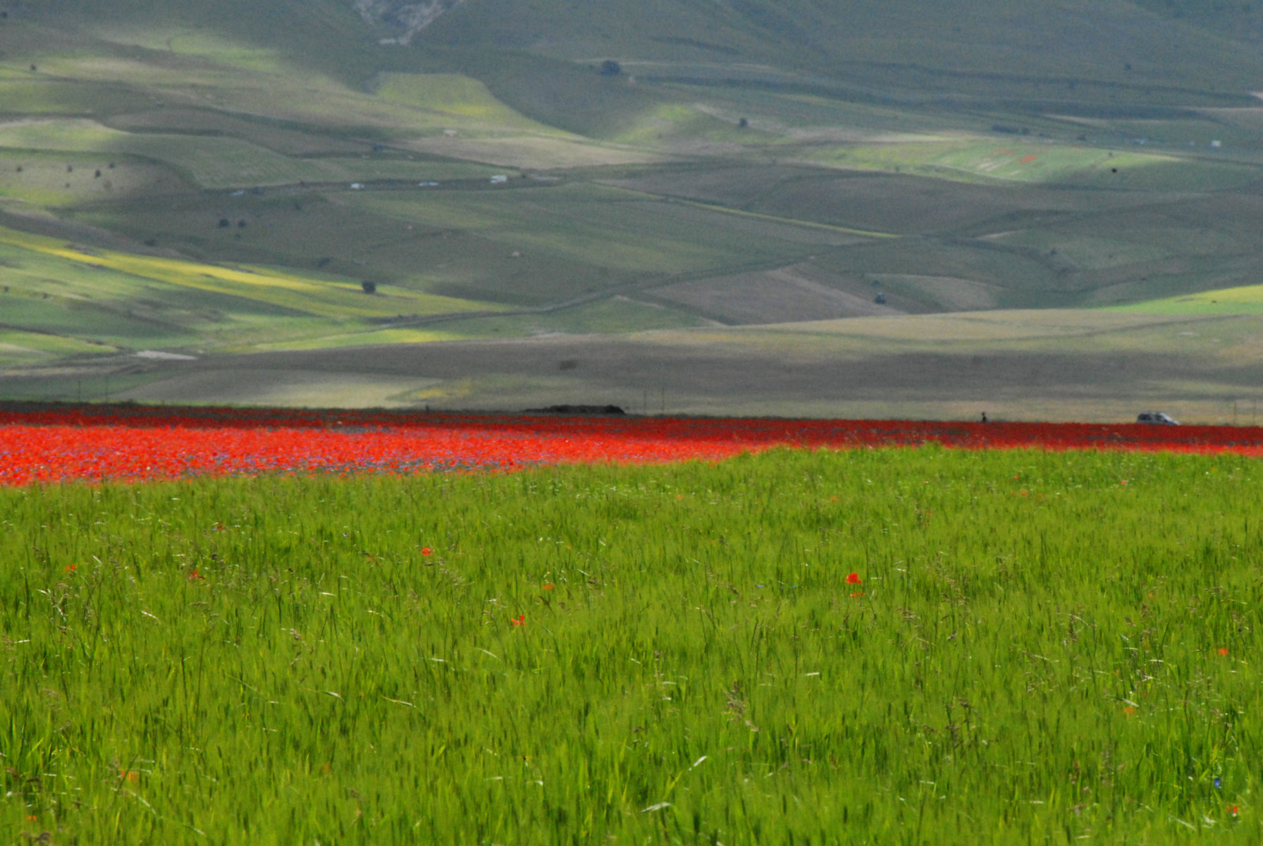 2014-la-fiorita-1a-609-fileminimizer