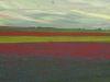 2014-la-fiorita-1a-459-fileminimizer