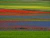 2014-la-fiorita-2a-405-fileminimizer