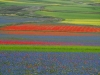 2014-la-fiorita-2a-413-fileminimizer