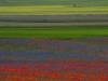 2014-la-fiorita-2a-49c-fileminimizer