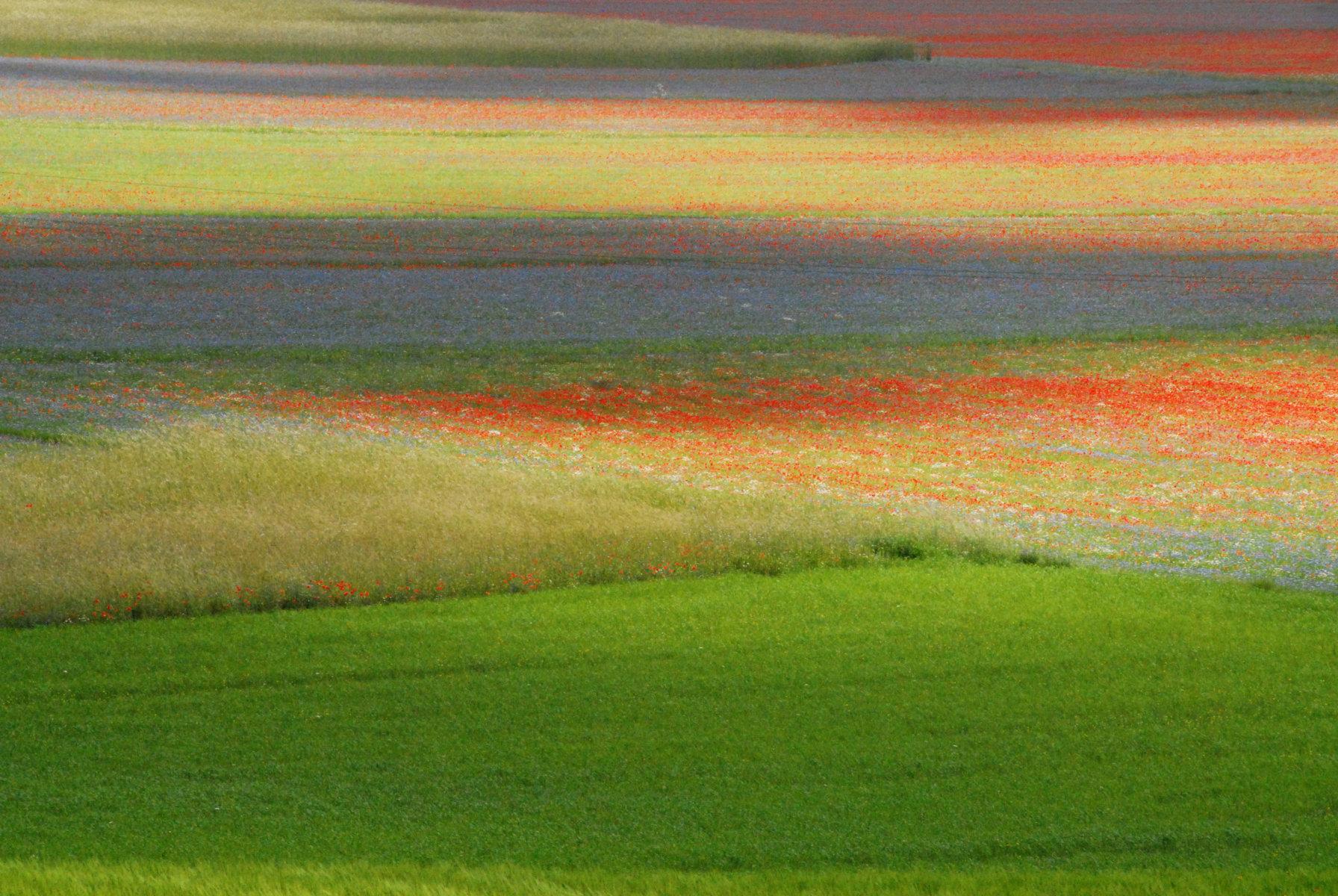 2014-la-fiorita-1a-392-fileminimizer