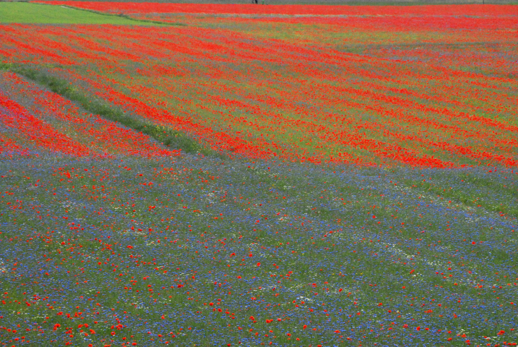 2014-la-fiorita-1a-442-fileminimizer