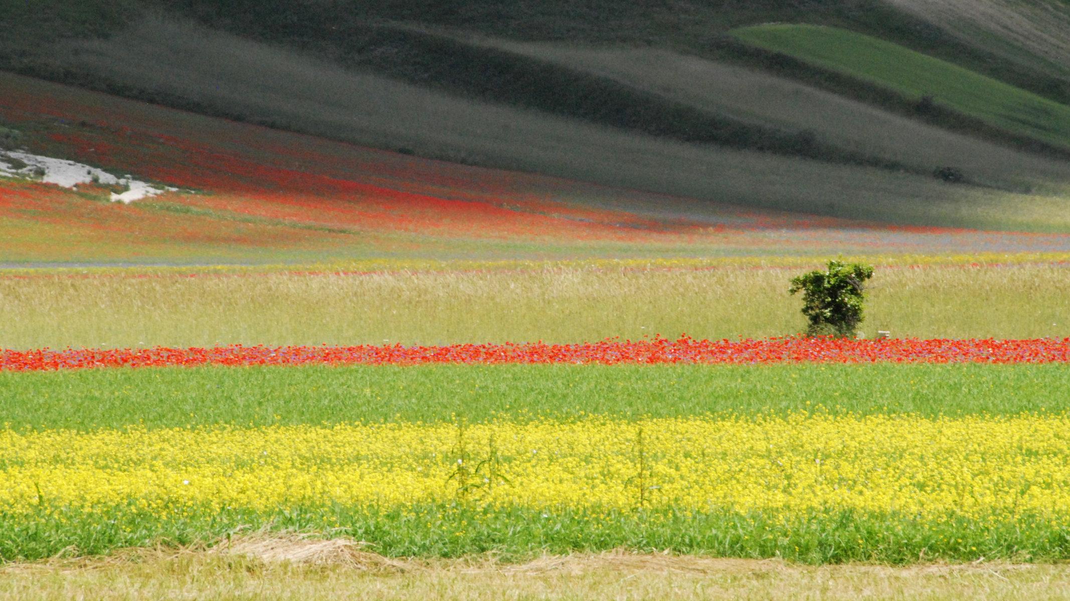 2014-la-fiorita-1a-786c-fileminimizer