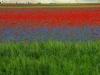 2014-la-fiorita-1a-566c-fileminimizer