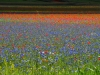 2014-la-fiorita-1a-605cv-fileminimizer