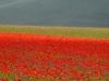 2014-la-fiorita-1a-647-fileminimizer