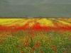 2014-la-fiorita-1a-854-fileminimizer