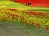 2014-la-fiorita-1a-910-fileminimizer
