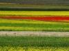 2014-la-fiorita-1a-925c-fileminimizer