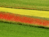2014-la-fiorita-2a-285-fileminimizer