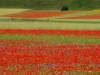 2014-la-fiorita-2a-460c-fileminimizer