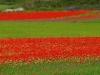 2014-la-fiorita-2a-468c-fileminimizer